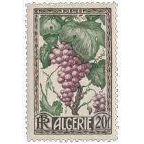 Algérie - Raisin