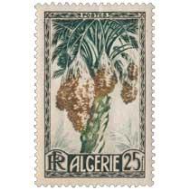 Algérie - Dattes