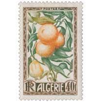 Algérie - Oranges et citrons