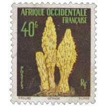 Afrique Occidentale Française - Cistanche