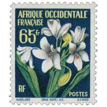 Afrique Occidentale Française - Cronum Moorei