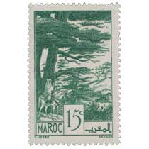 1939 Maroc - Forêt de cèdres - Ifrane