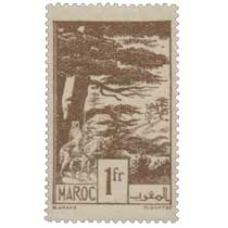 1945 Maroc - Forêt de cèdres - Ifrane