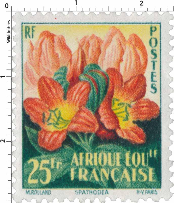 Spathodéa Afrique Équatoriale Française