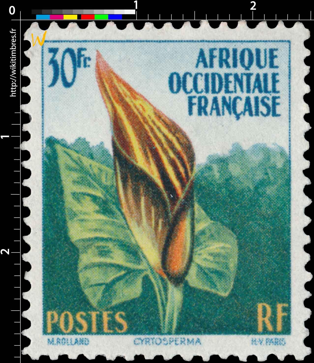 Afrique Occidentale Française - Cyrtosperma