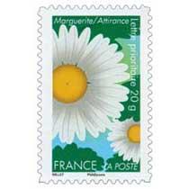 Marguerite / Attirance