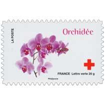 2014 Orchidée