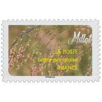 2017 Millet