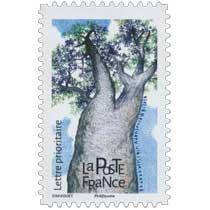 2018 Baobab africain - Adansonia digitata