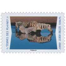 2020 Zèbres des plaines