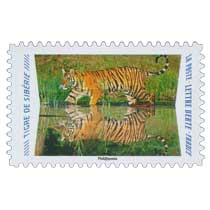 2020 Tigre de Sibérie