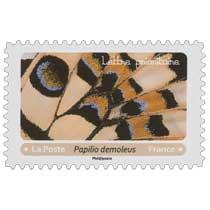 2020 Papilio demoleus