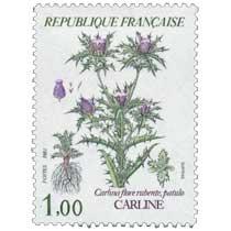 1983 CARLINE Carlina flore rubente, patulo