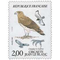 1984 CIRCAÈTE JEAN LE BLANC Circaetus G. Gallicus