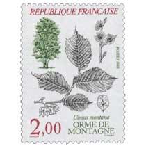 1985 ORME DE MONTAGNE Ulmus montana