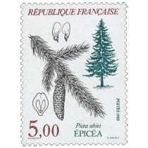 1985 ÉPICÉA Picea abies