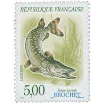 1990 BROCHET Esox lucius
