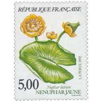 1992 NÉNUPHAR JAUNE Nuphar luteum