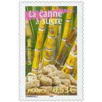 2005 La canne à sucre