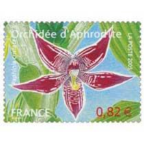 2005 Orchidée d'Aphrodite Paphinia cristata