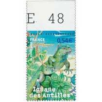 2007 Iguane des Antilles