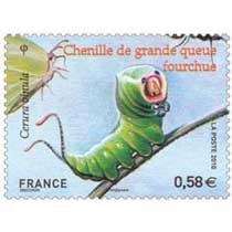 2010 Chenille de grande queue fourchue Cerura vinula