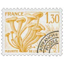 PLEUROTE DE L'OLIVIER