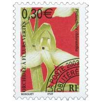 2003 ORCHIDÉE À FLEURS VERTES Platanthera chlorantha