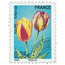 2008 TULIPE – Tulipa sp.