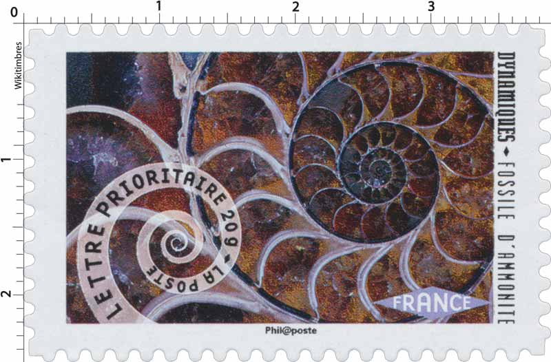2014 Dynamiques Fossile d'Ammonite