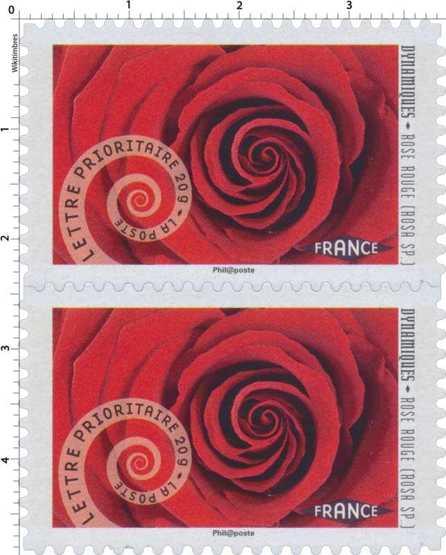 2014 Dynamiques Rose rouge (Rosa Sp.)
