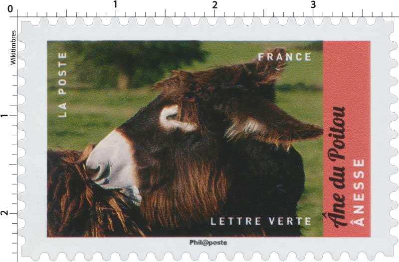 2017 Ane du Poitou- Anesse