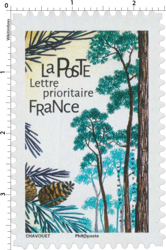 2018 Pin sylvestre - Pinus sylvestris
