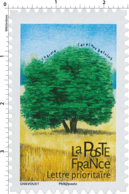 2018 Charme - Carpinus betulus