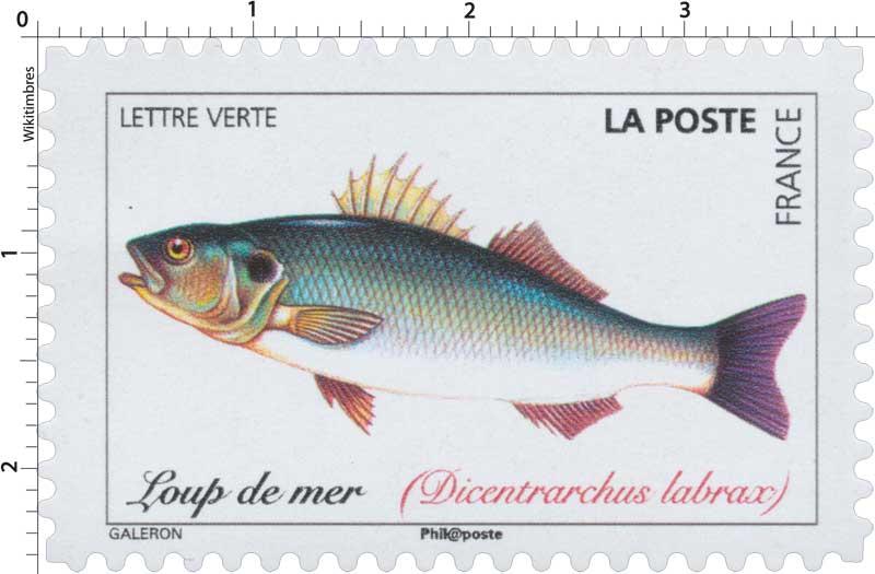 2019 Loup de mer (Dicentrarchus labrax)