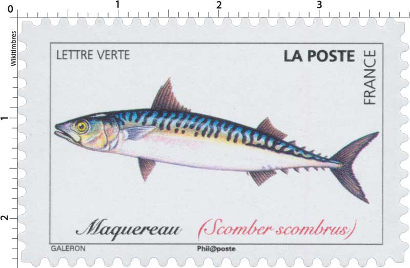 2019 Maquereau (Scomber scombrus)