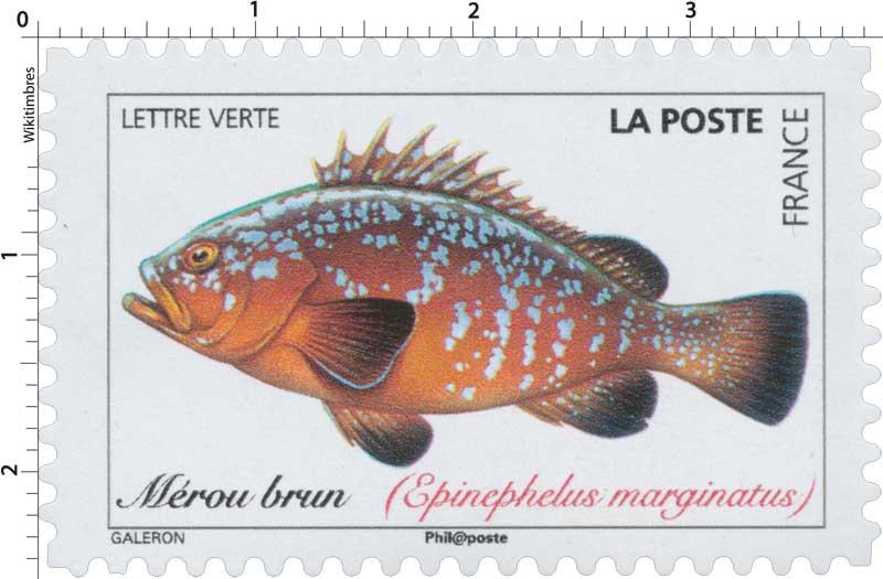 2019 Mérou brun (Epinephelus marginatus)