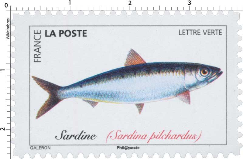 2019 Sardine (Sardina pilchardus)