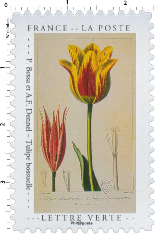 2020 P. Bessa et A.F. Dennel – Tulipe bossuelle