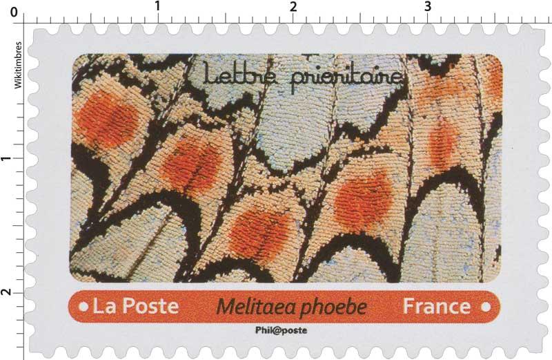 2020 Melitaea phoebe