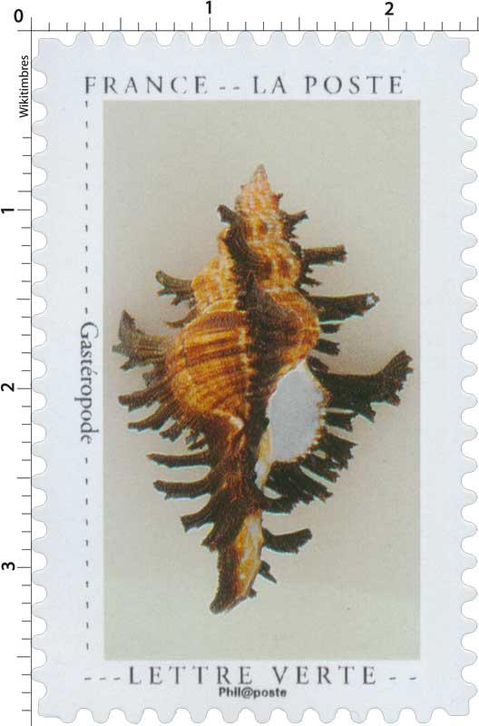 2020 Gastéropode