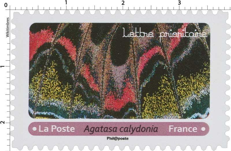 2020 Agatasa calydonia