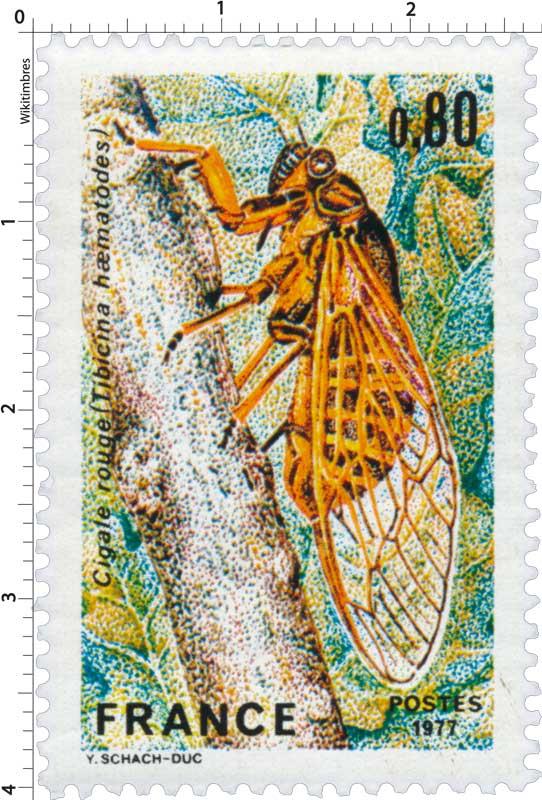 1977 Cigale rouge (Tibicina haematodes)