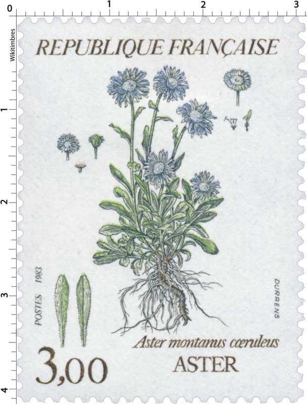 1983 Aster montanus coeruleus - ASTER