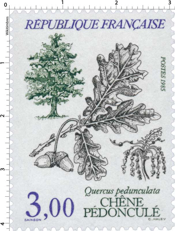 1985 CHÊNE PÉDONCULÉ Quercus pedunculata