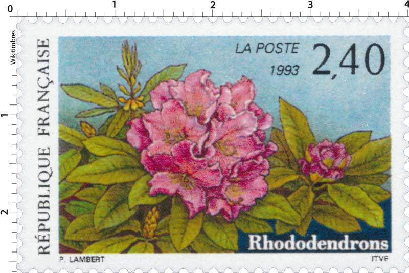1993 Rhododendrons