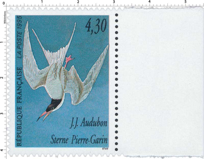 1995 J.J. Audubon Sterne Pierre-Garin