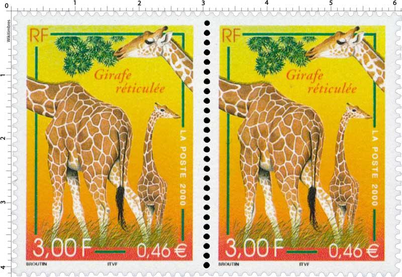 2000 Girafe réticulée