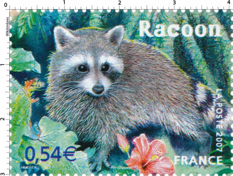 2007 Racoon