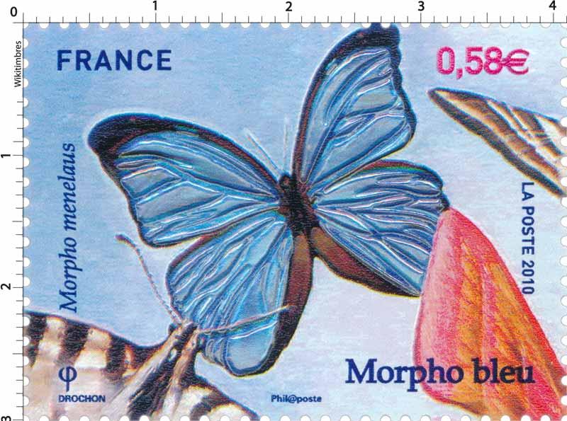 2010 Morpho bleu - Morpho menelaus